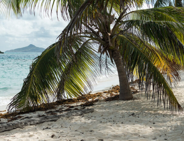 adventurer - sailing - caribbean-87